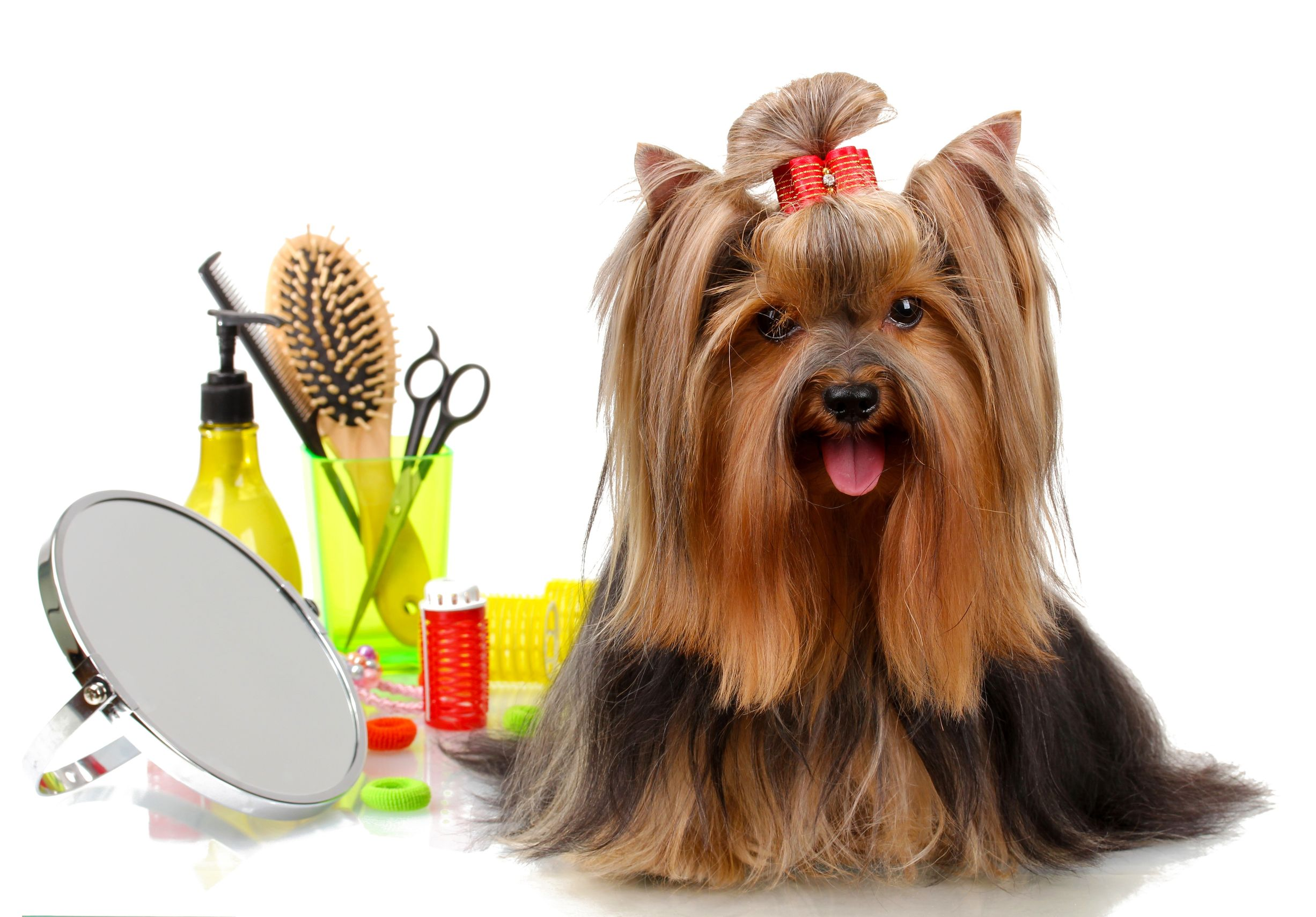 Precious Pets Dog Walking And Pet Care Services Bedfordshire